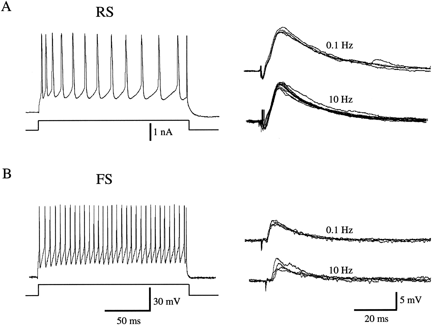 Different Balance of Excitation and Inhibition in Forward