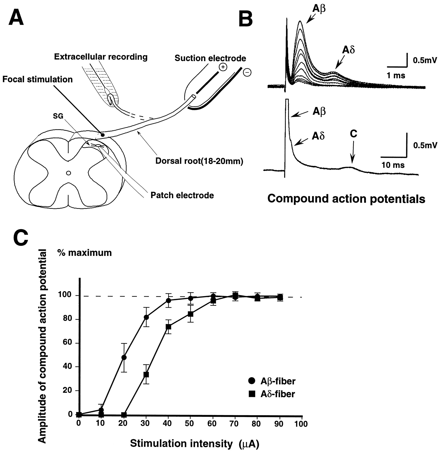 Peripheral Inflammation Facilitates A Fiber Mediated