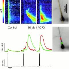 Jane Schaffer Spider Diagram Example Light Switch Wiring Australia Hpm Inositol 1 4 5 Trisphosphate Ip3 Mediated Ca2 Release Evoked By Download Figure