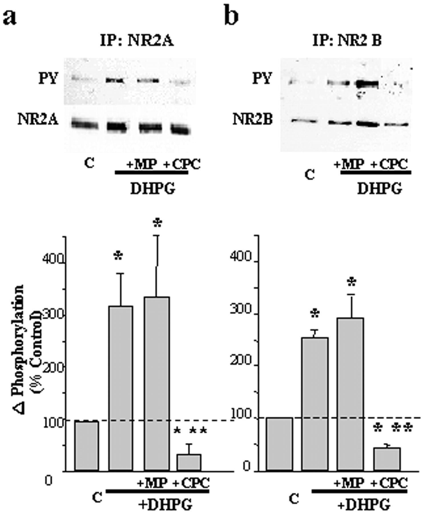 Metabotropic Glutamate Receptor 1 Induced Upregulation Of Nmda Receptor Current Mediation