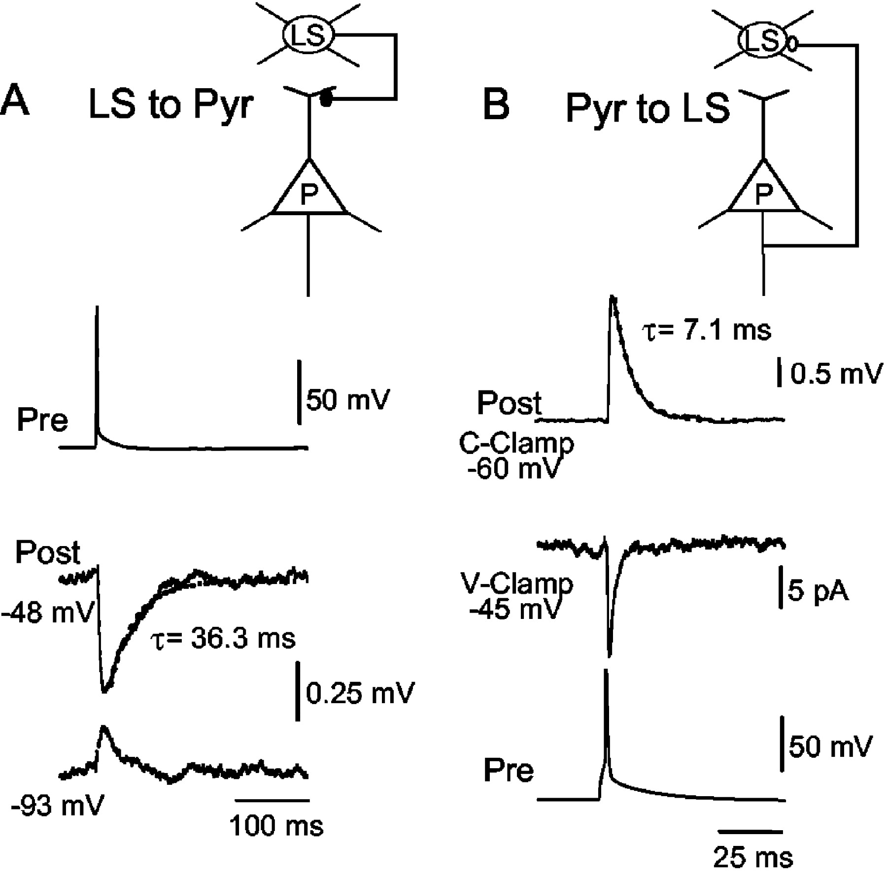 Synaptic Interactions of Late-Spiking Neocortical Neurons