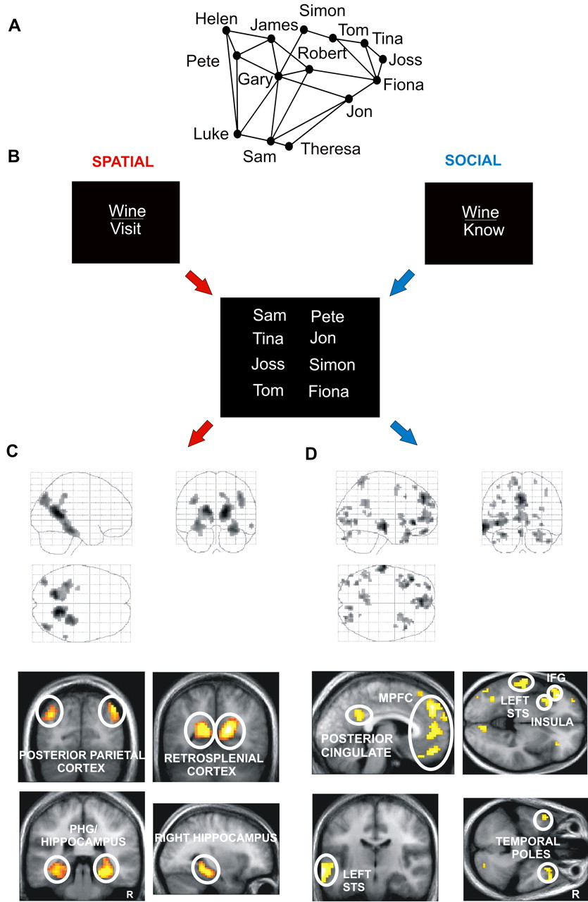 The Human Hippocampus: Cognitive Maps or Relational Memory