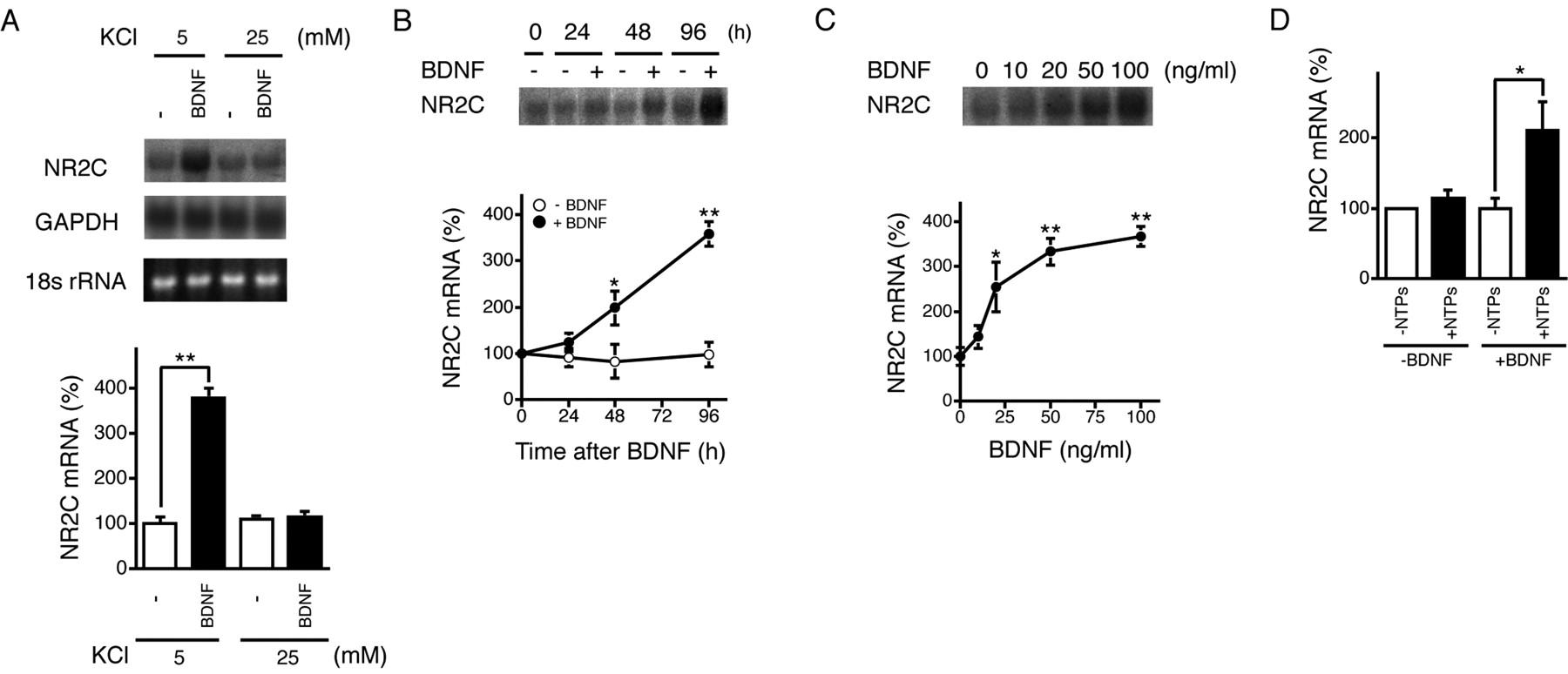 Neuronal Depolarization Controls Brain Derived Neurotrophic Factor Induced Upregulation Of Nr2c
