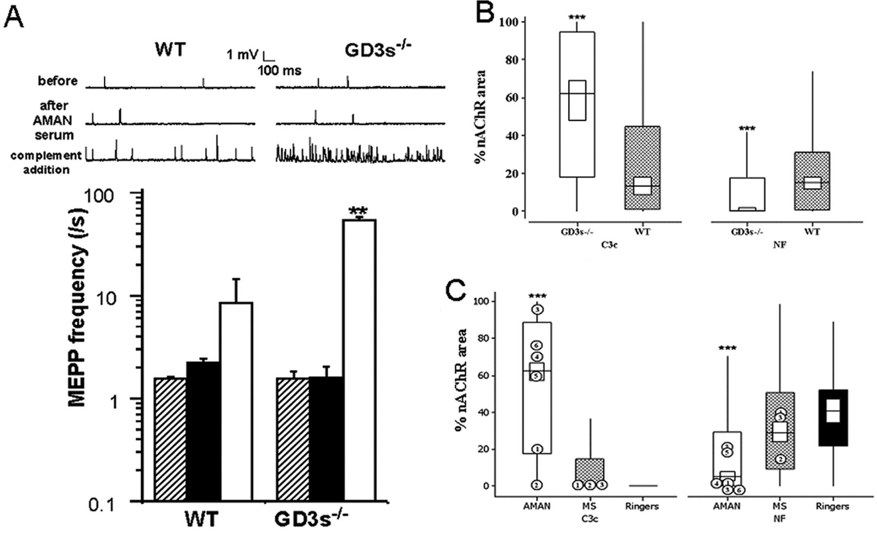 Overexpression of GD1a Ganglioside Sensitizes Motor Nerve