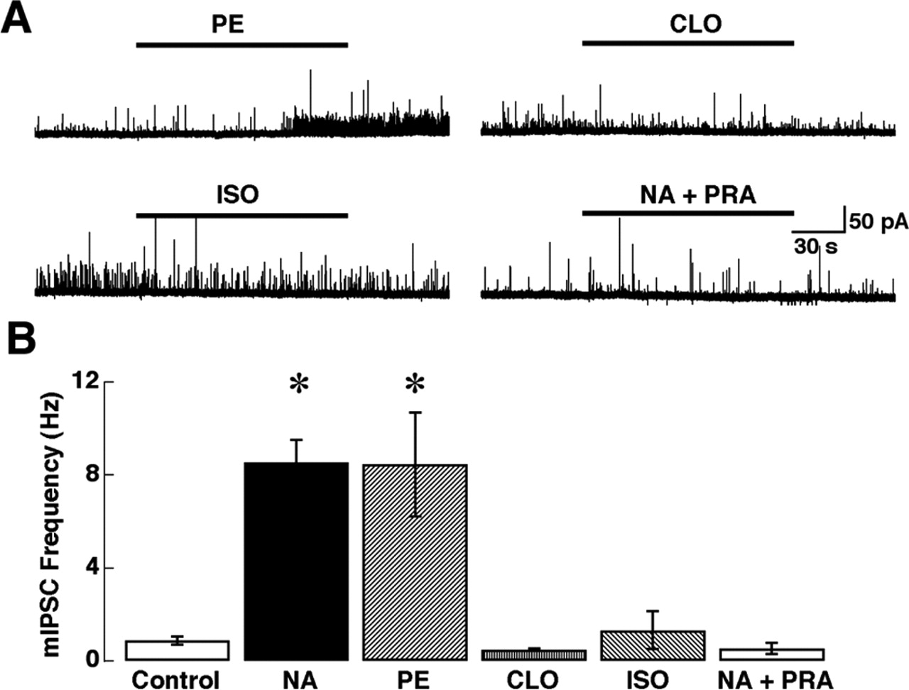 Adrenergic Enhancement of Inhibitory Transmission in the