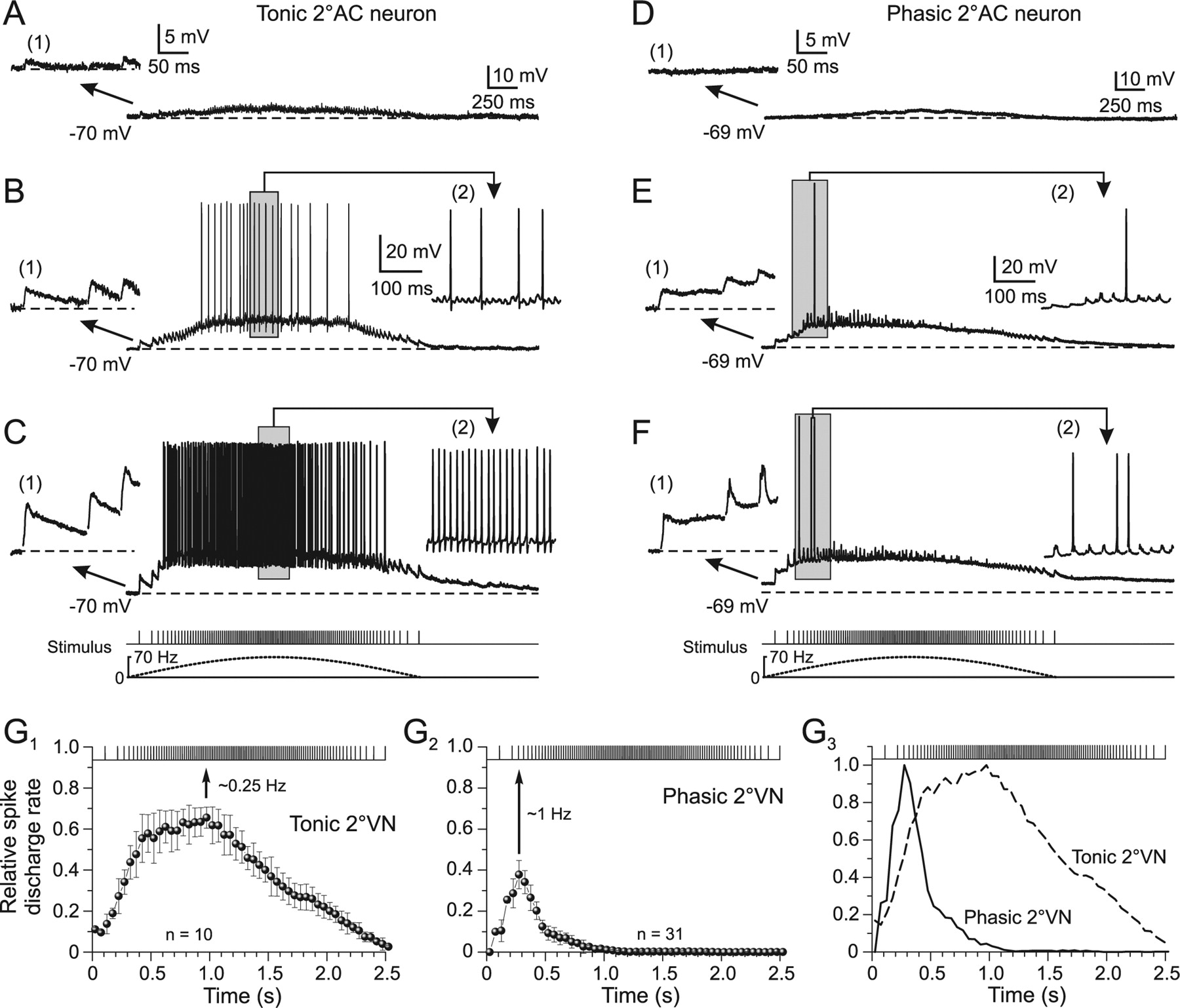 Differential Dynamic Processing Of Afferent Signals In Frog Tonic And Phasic Second Order