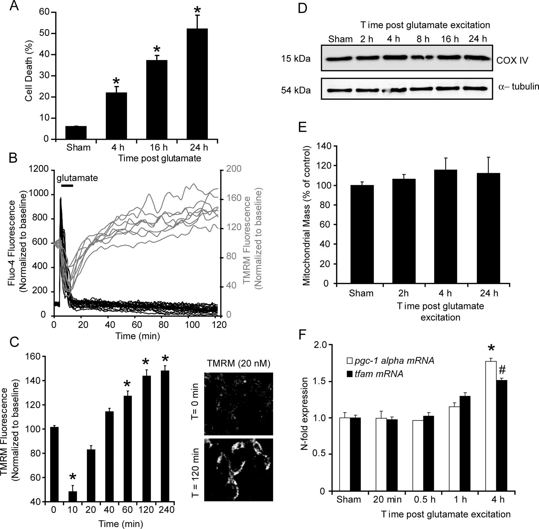 Regulation of Glucose Transporter 3 Surface Expression by