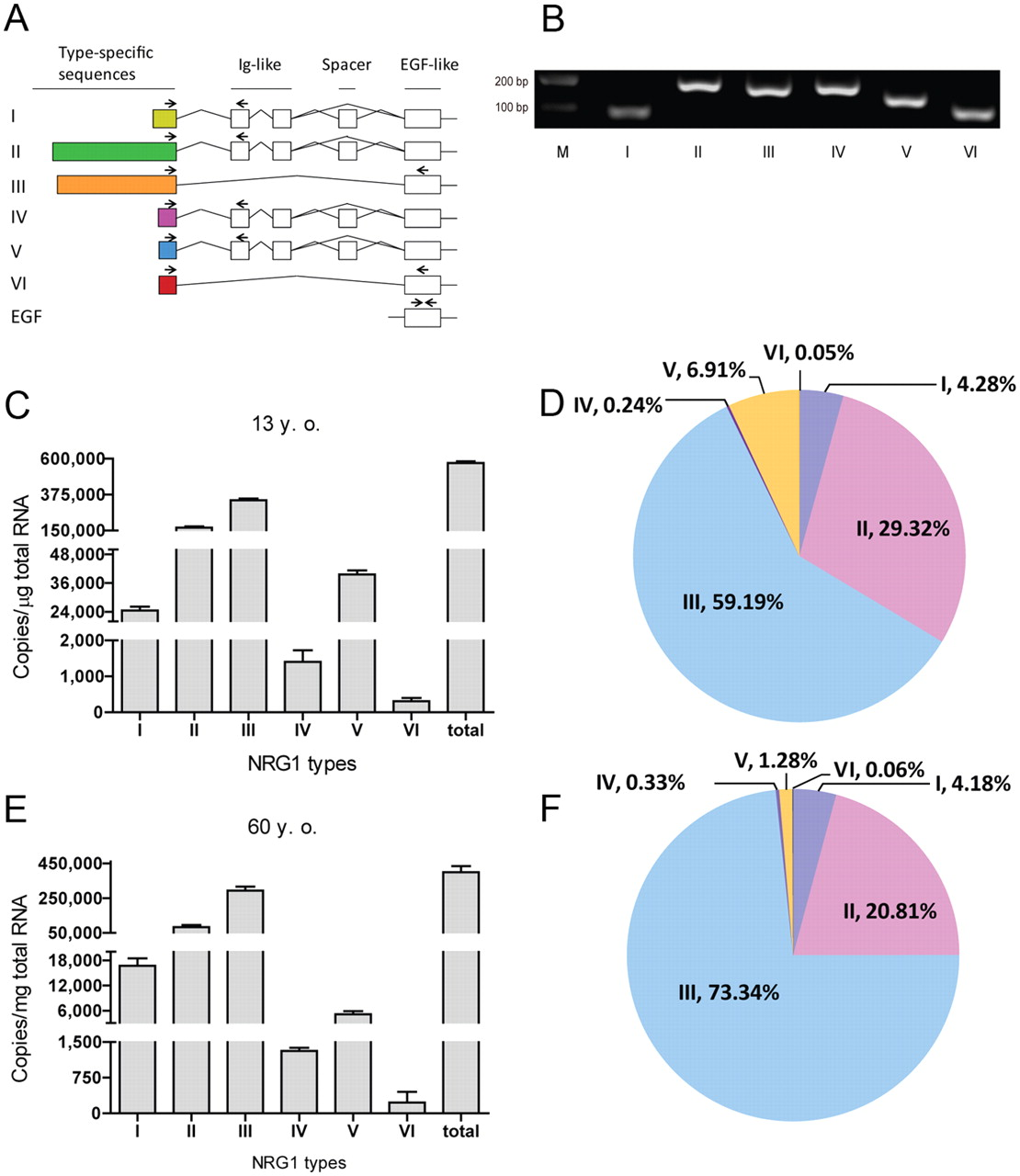 Specific Regulation Of Nrg1 Isoform Expression By Neuronal Activity