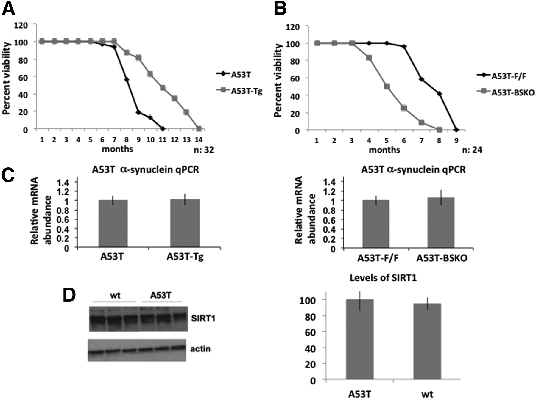 SIRT1 Protects against α-Synuclein Aggregation by