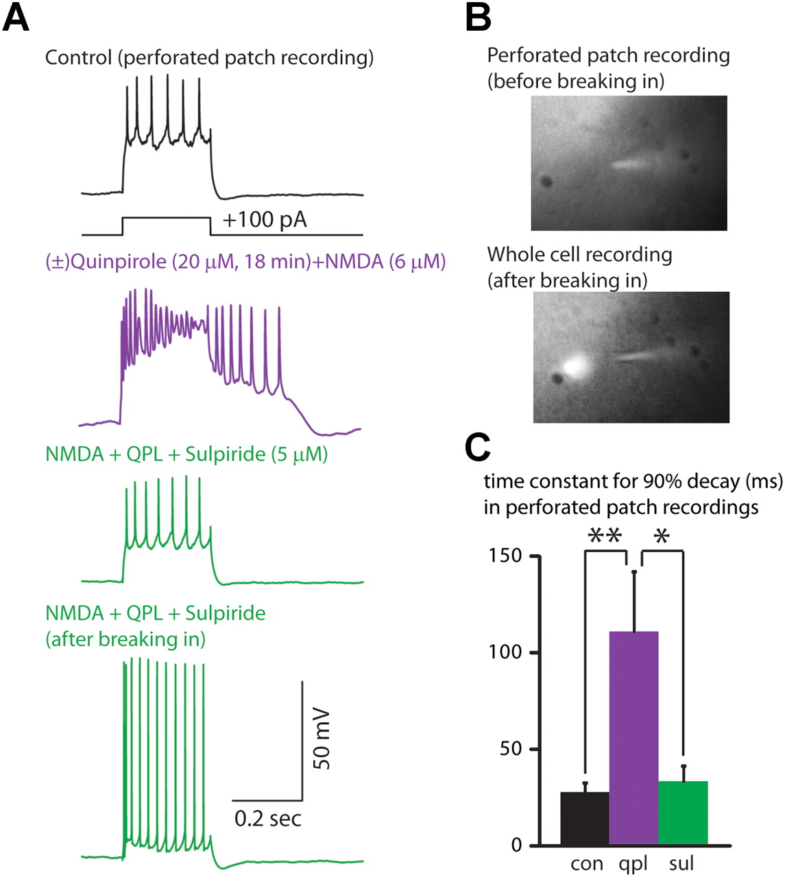 Synaptic Activity Unmasks Dopamine D2 Receptor Modulation Of A Specific Class Of Layer V
