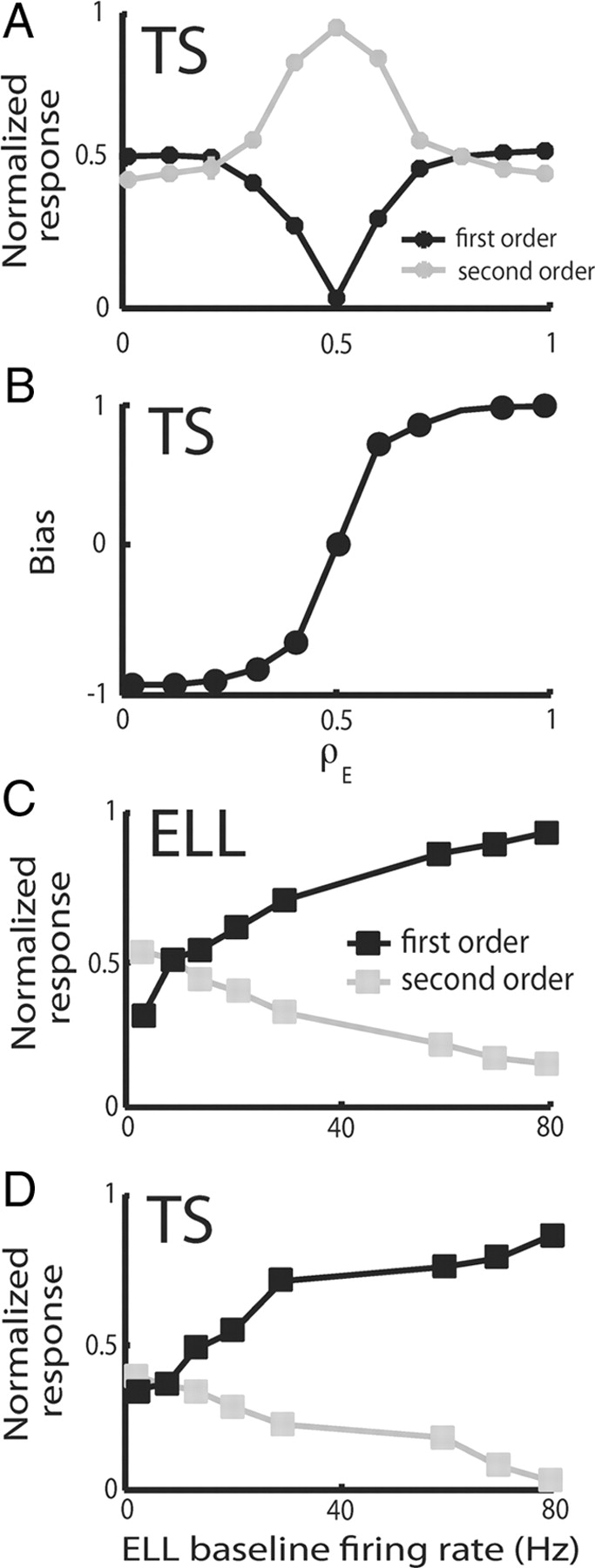 Parallel Coding of First- and Second-Order Stimulus