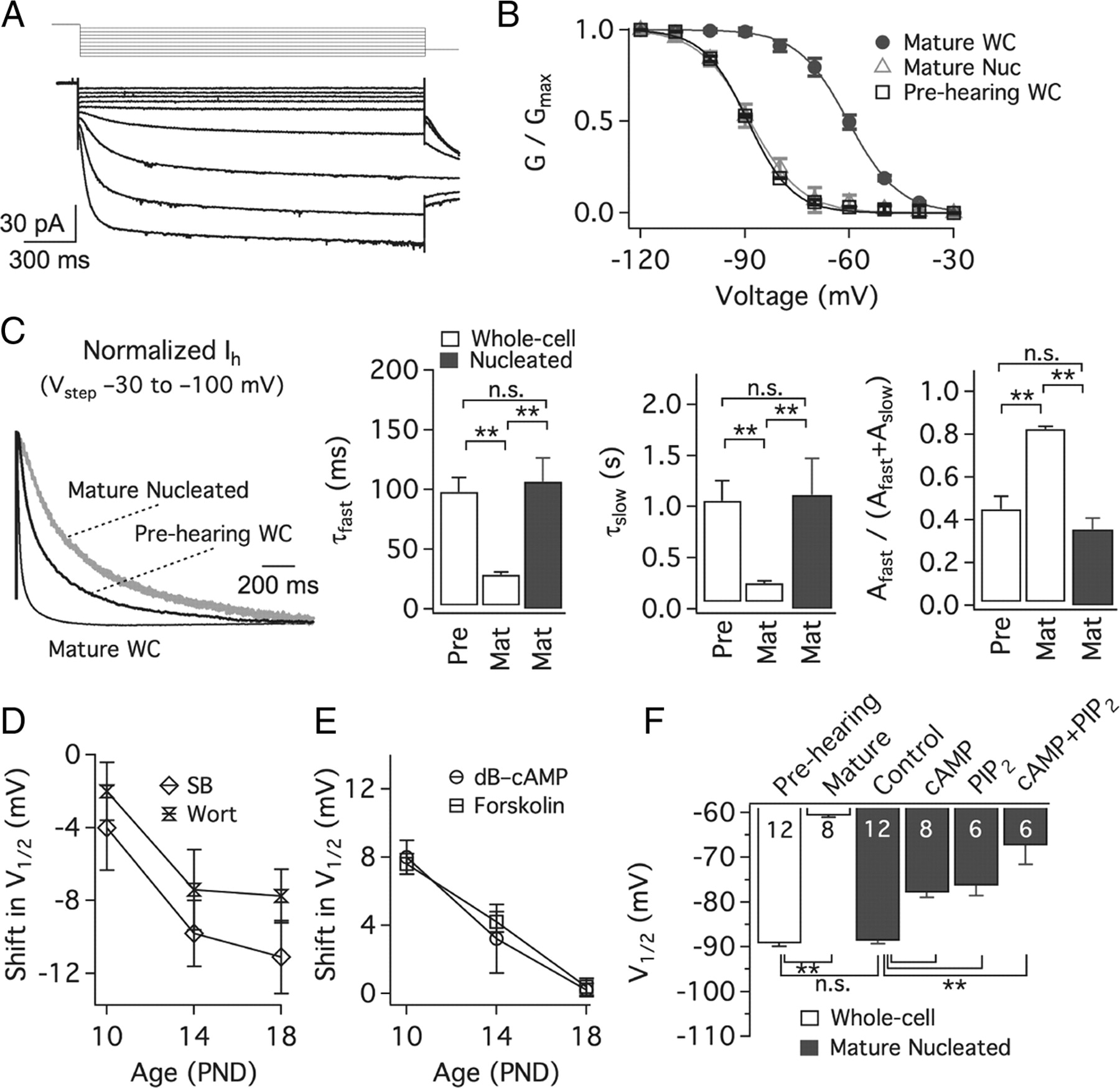 An Essential Role For Modulation Of Hyperpolarization Activated Current In The Development Of