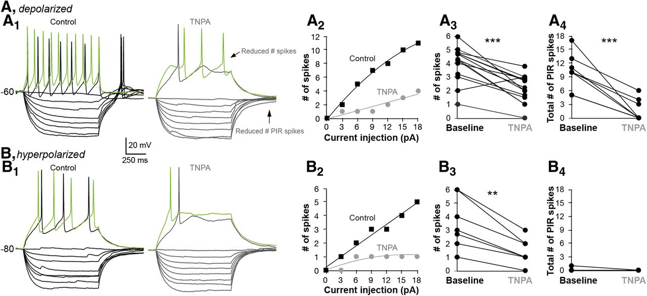 Dopamine Differentially Modulates the Excitability of