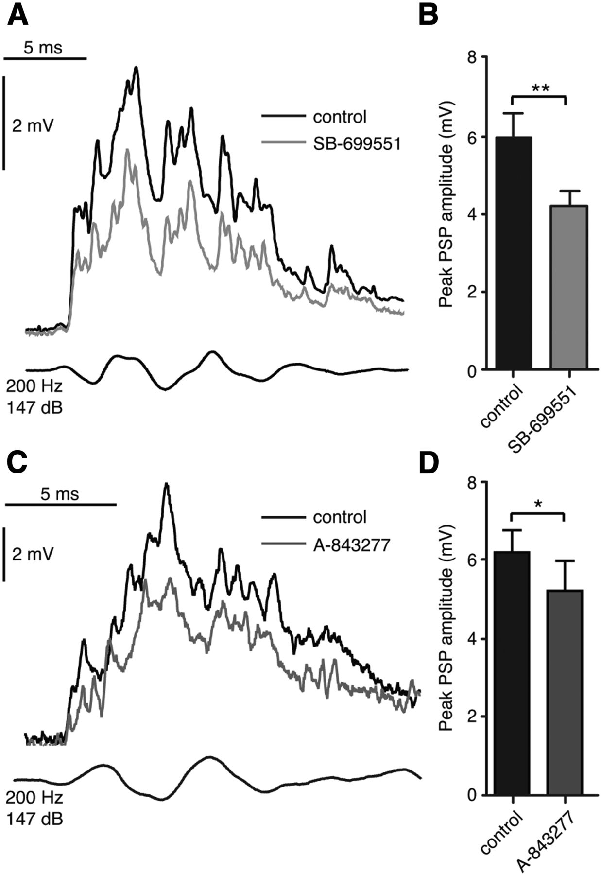 The 5-HT5A Receptor Regulates Excitability in the Auditory
