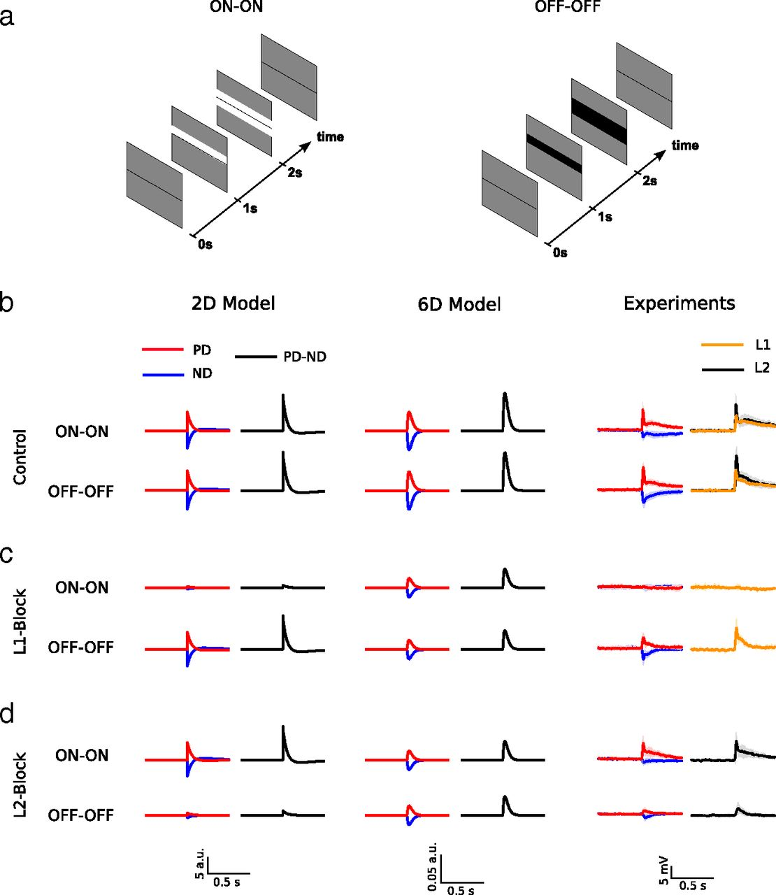 Functional Specialization of Parallel Motion Detection