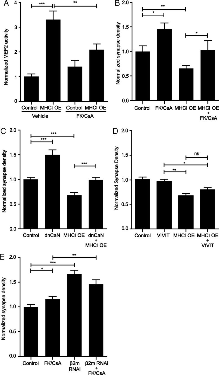 MHCI Requires MEF2 Transcription Factors to Negatively