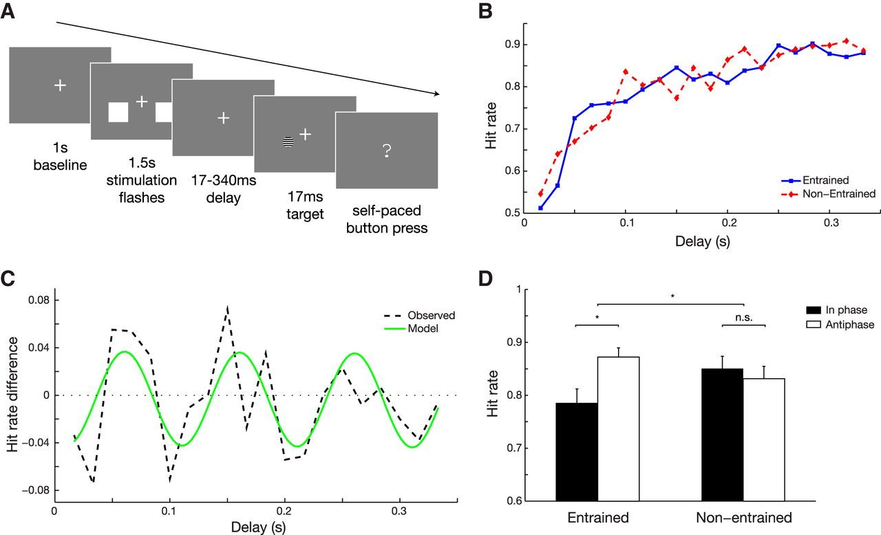 Local Entrainment Of Alpha Oscillations By Visual Stimuli Causes Cyclic Modulation Of Perception