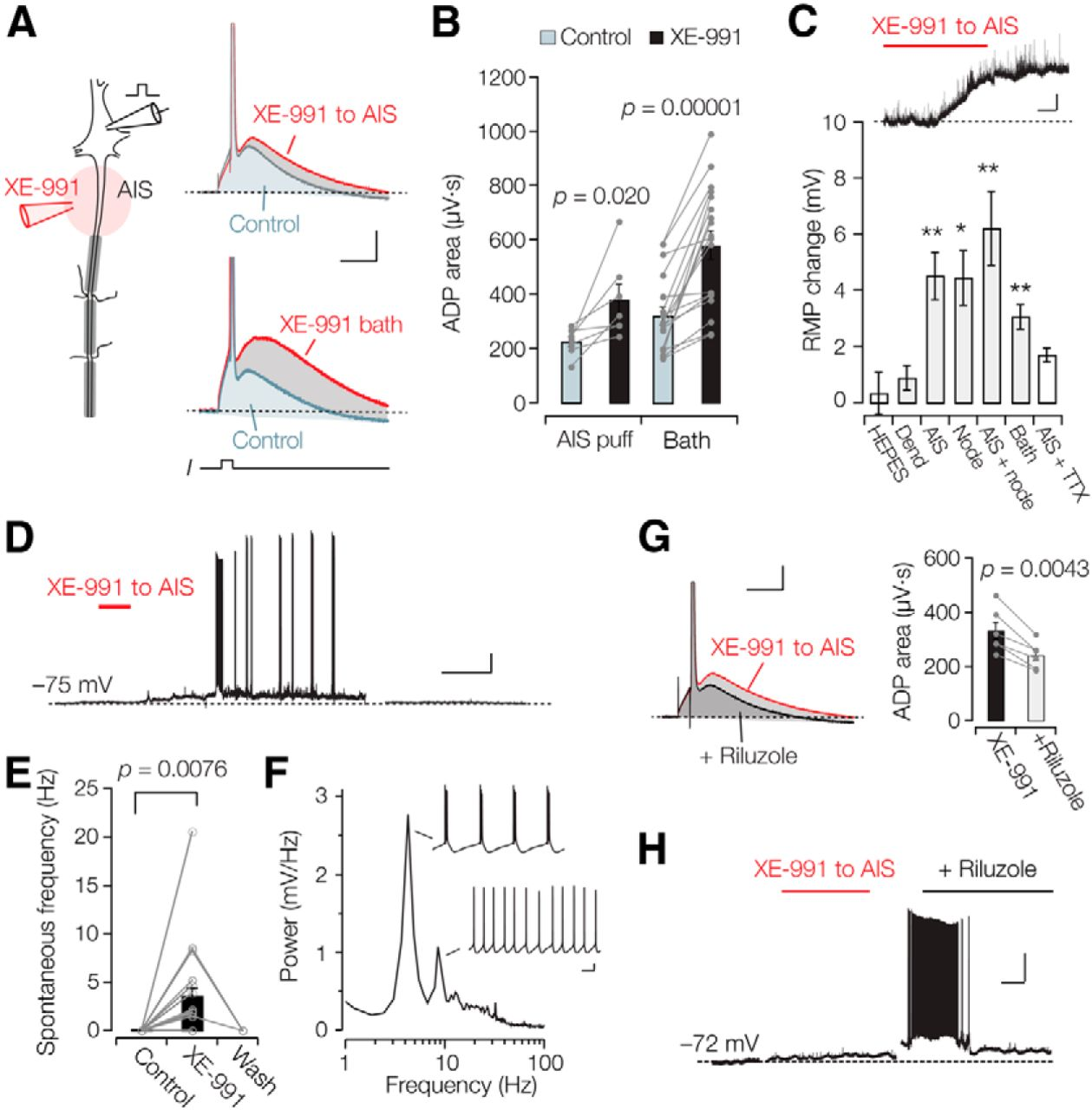 Heteromeric Kv7 2 7 3 Channels Differentially Regulate Action Potential Initiation And