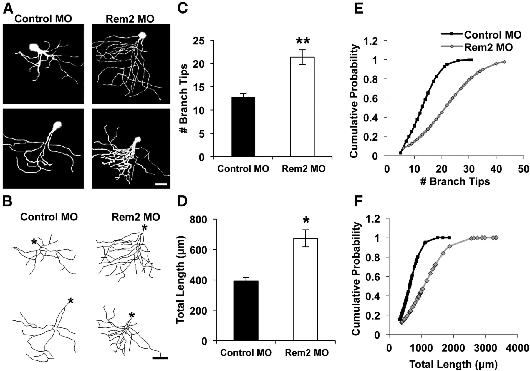 Rem2 Is an Activity-Dependent Negative Regulator of