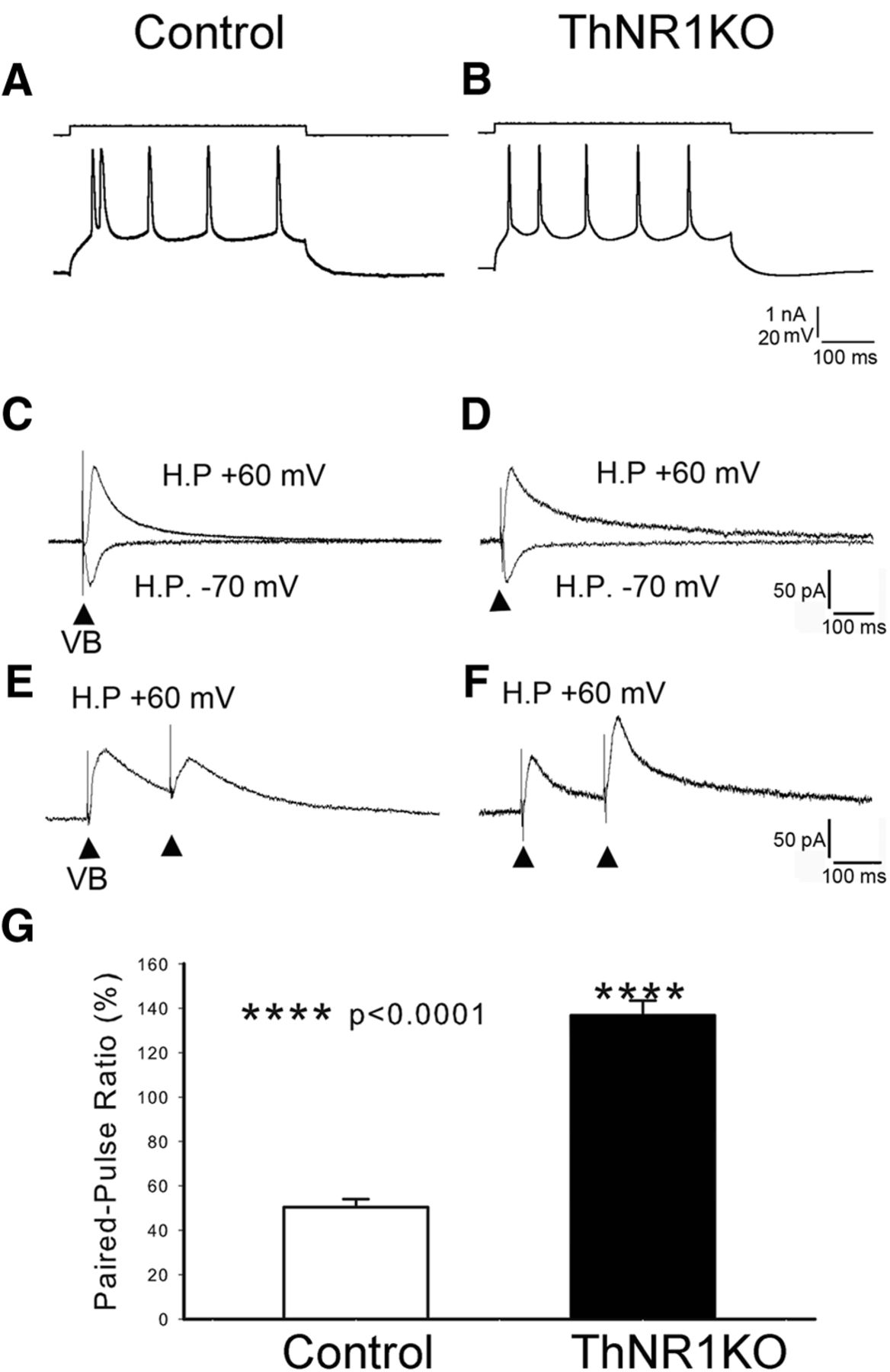 Thalamic NMDA Receptor Function Is Necessary for