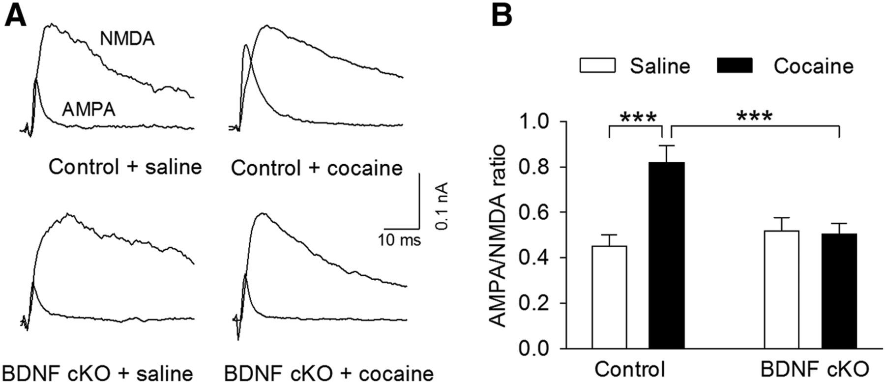 BDNF Interacts with Endocannabinoids to Regulate Cocaine