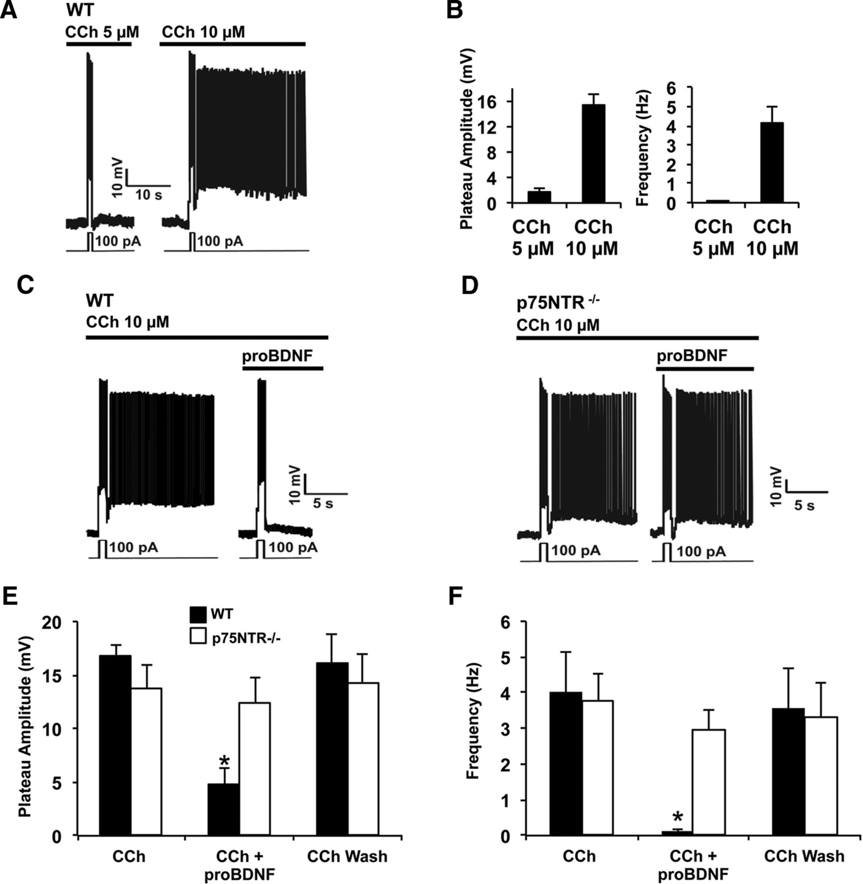 proBDNF and p75NTR Control Excitability and Persistent