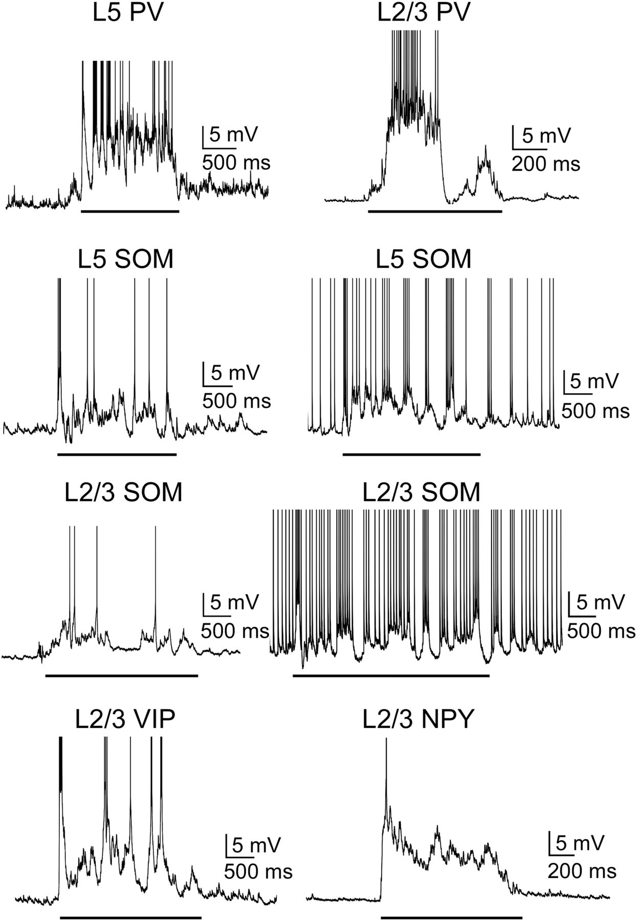 Contributions of Diverse Excitatory and Inhibitory Neurons