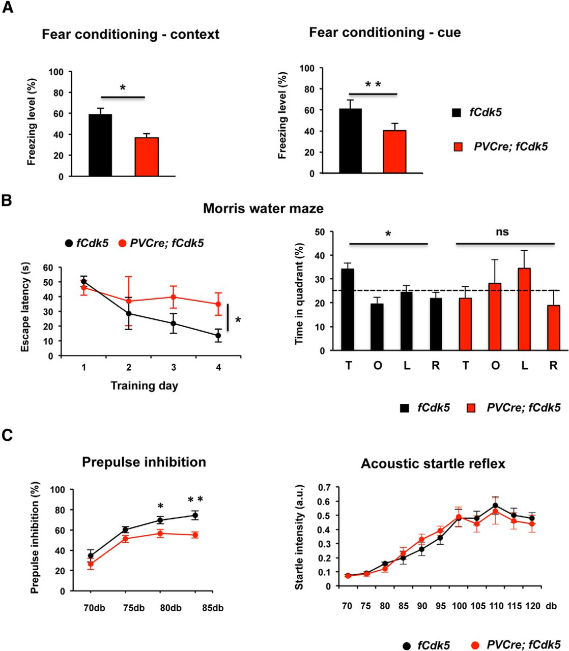 Loss of Cyclin-Dependent Kinase 5 from Parvalbumin