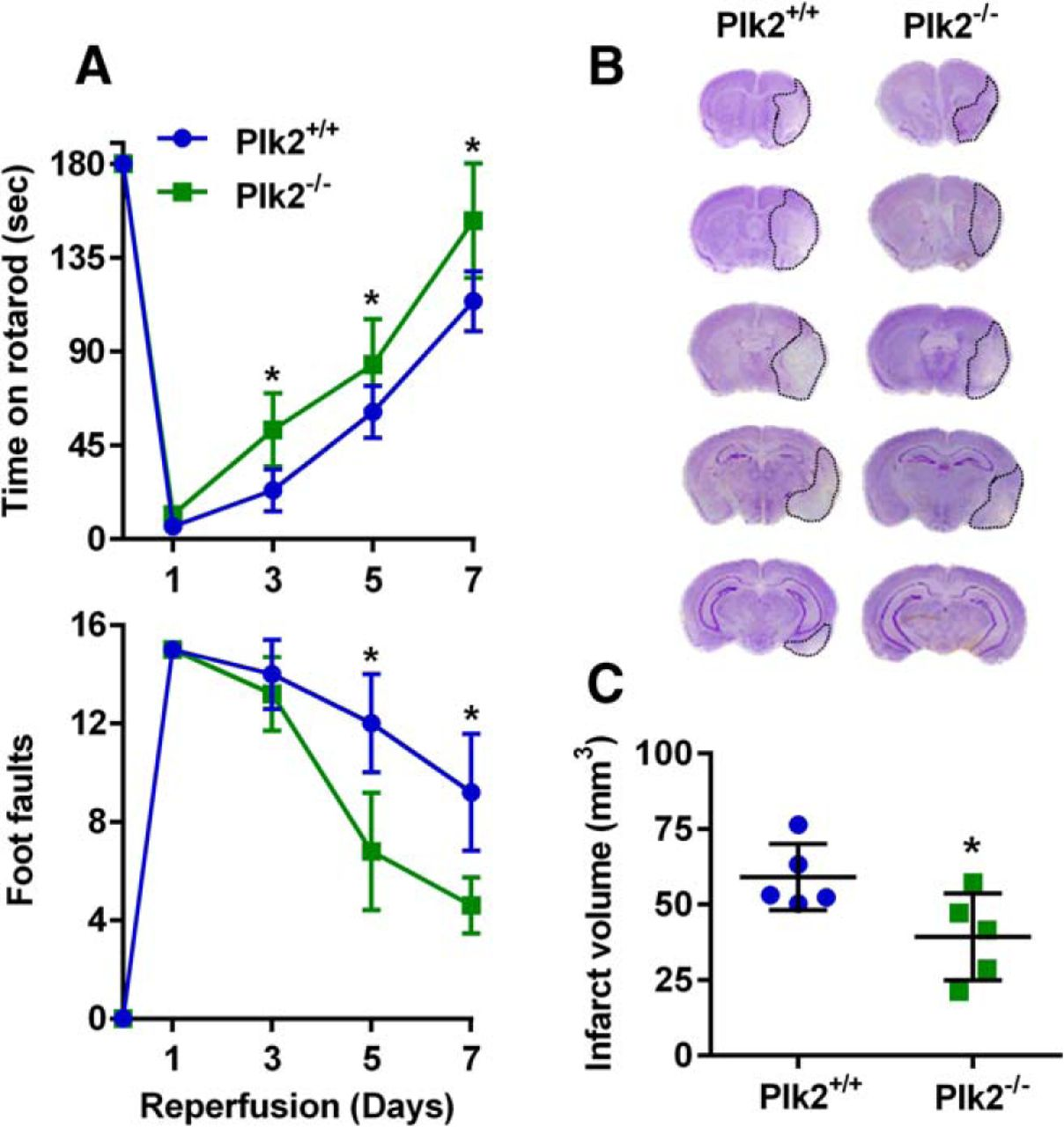 Poststroke Induction Of Synuclein Mediates Ischemic Brain Damage