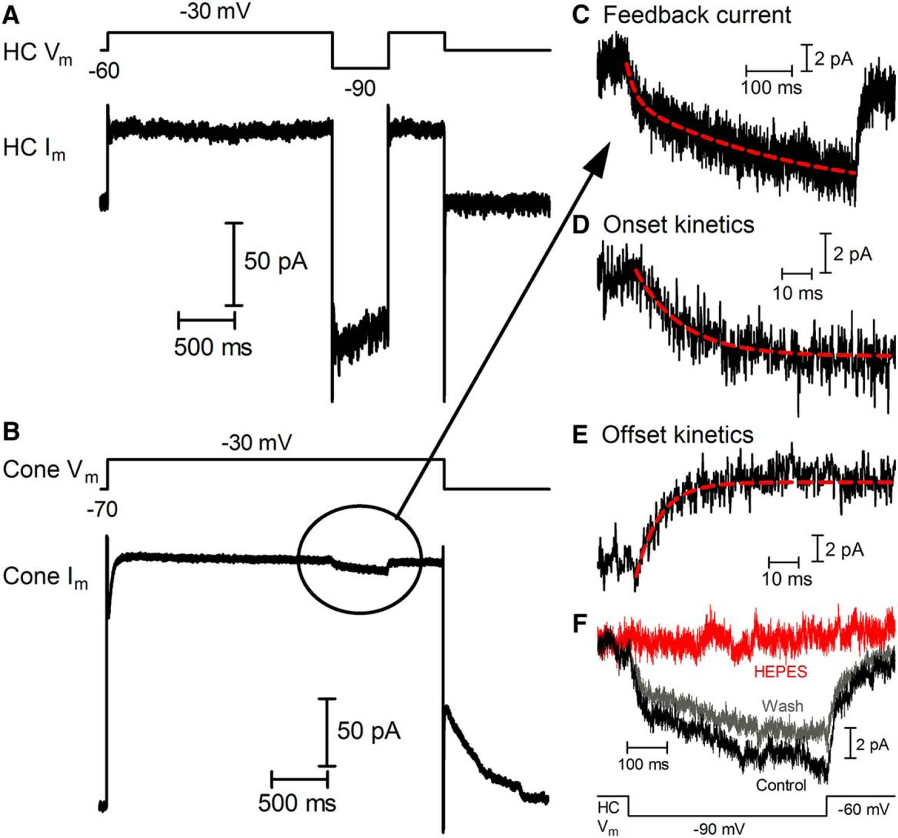 Kinetics of Inhibitory Feedback from Horizontal Cells to