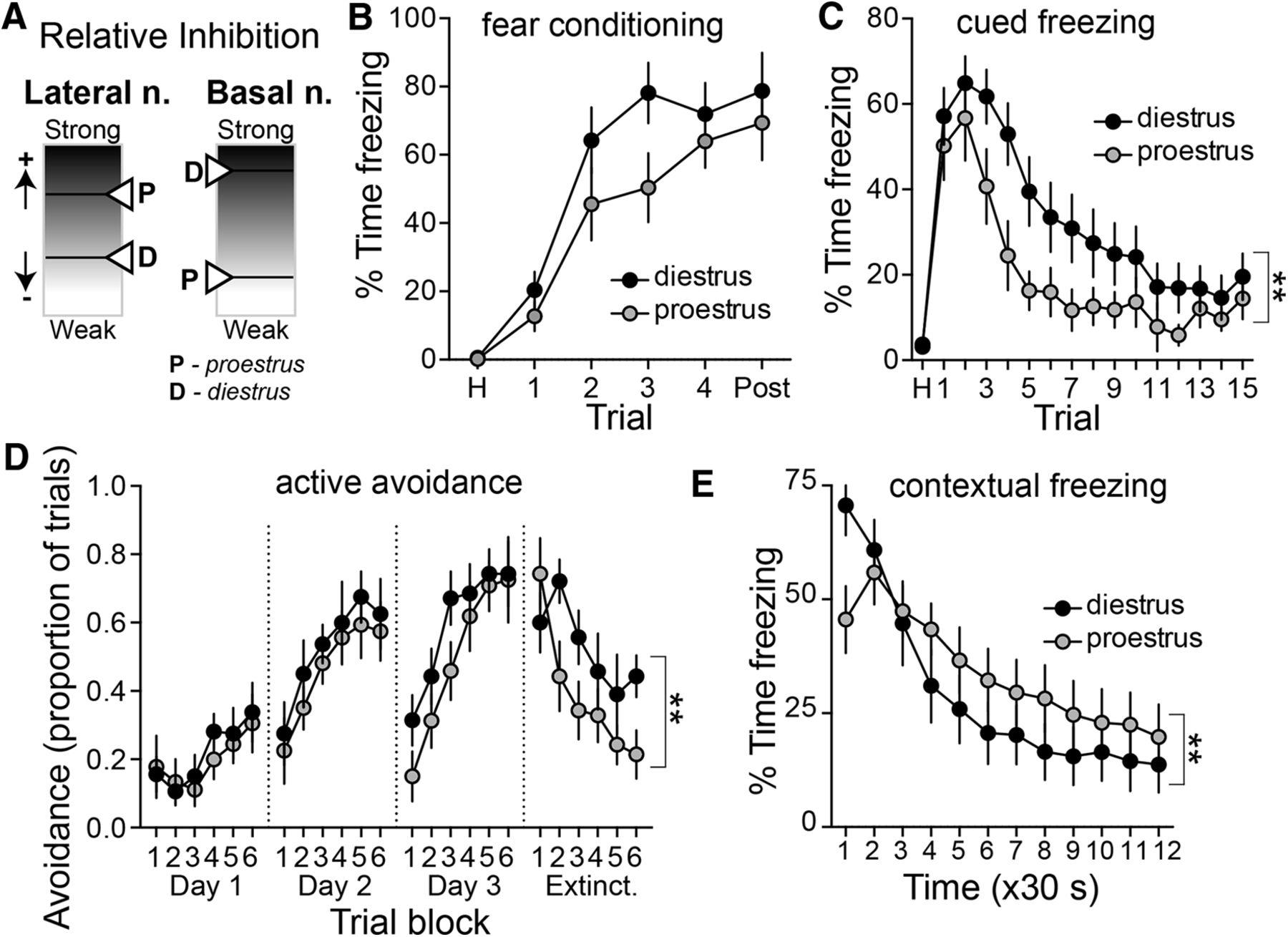 medium resolution of sex and estrus dependent differences in rat basolateral amygdala journal of neuroscience