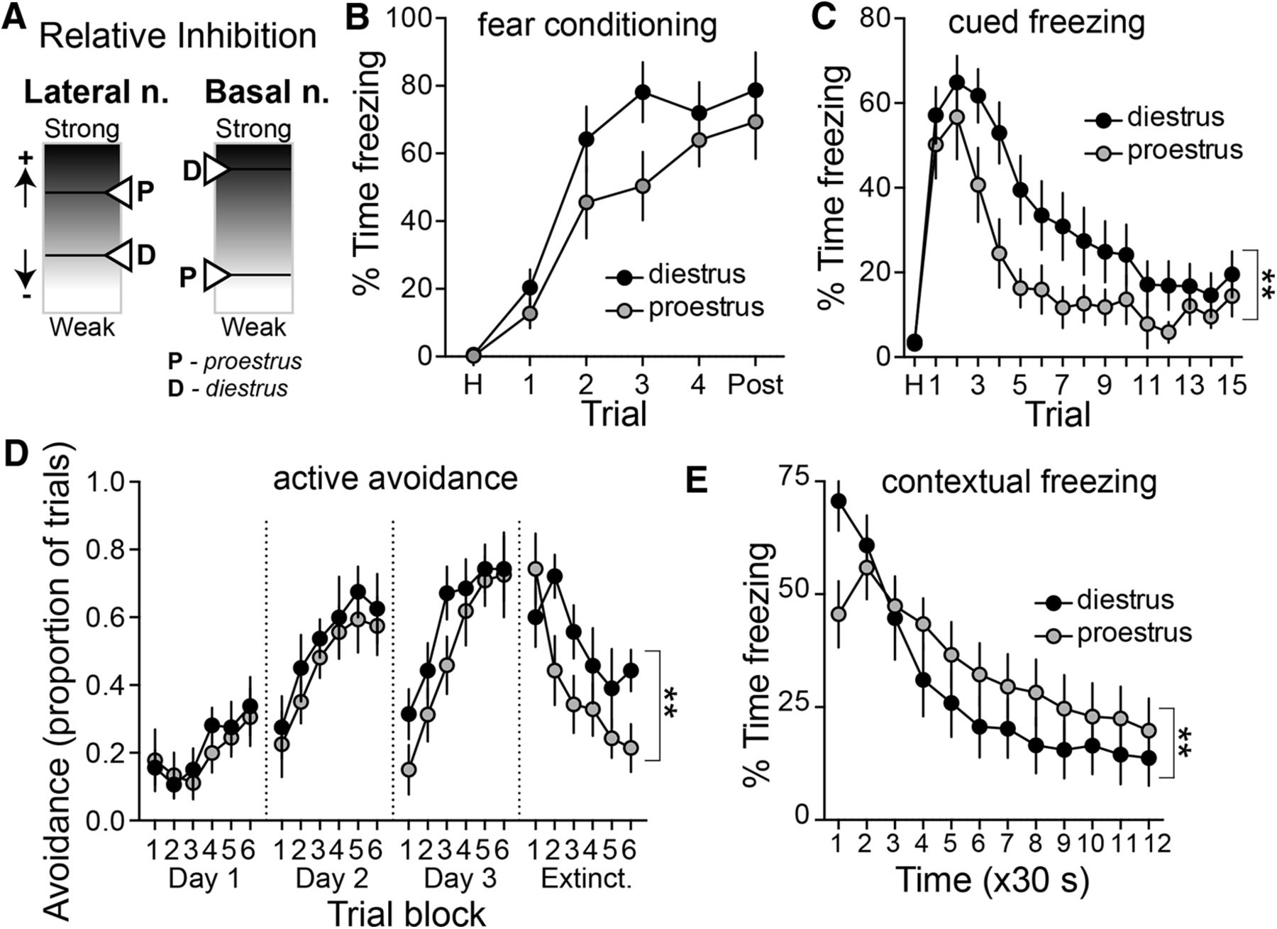 small resolution of sex and estrus dependent differences in rat basolateral amygdala journal of neuroscience