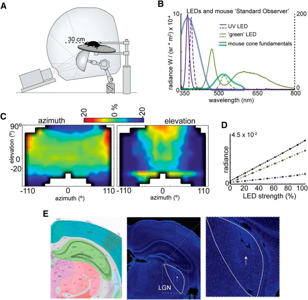 medium resolution of spatial organization of chromatic pathways in the mouse dorsal pc fan schematic mouse dorsal schematic
