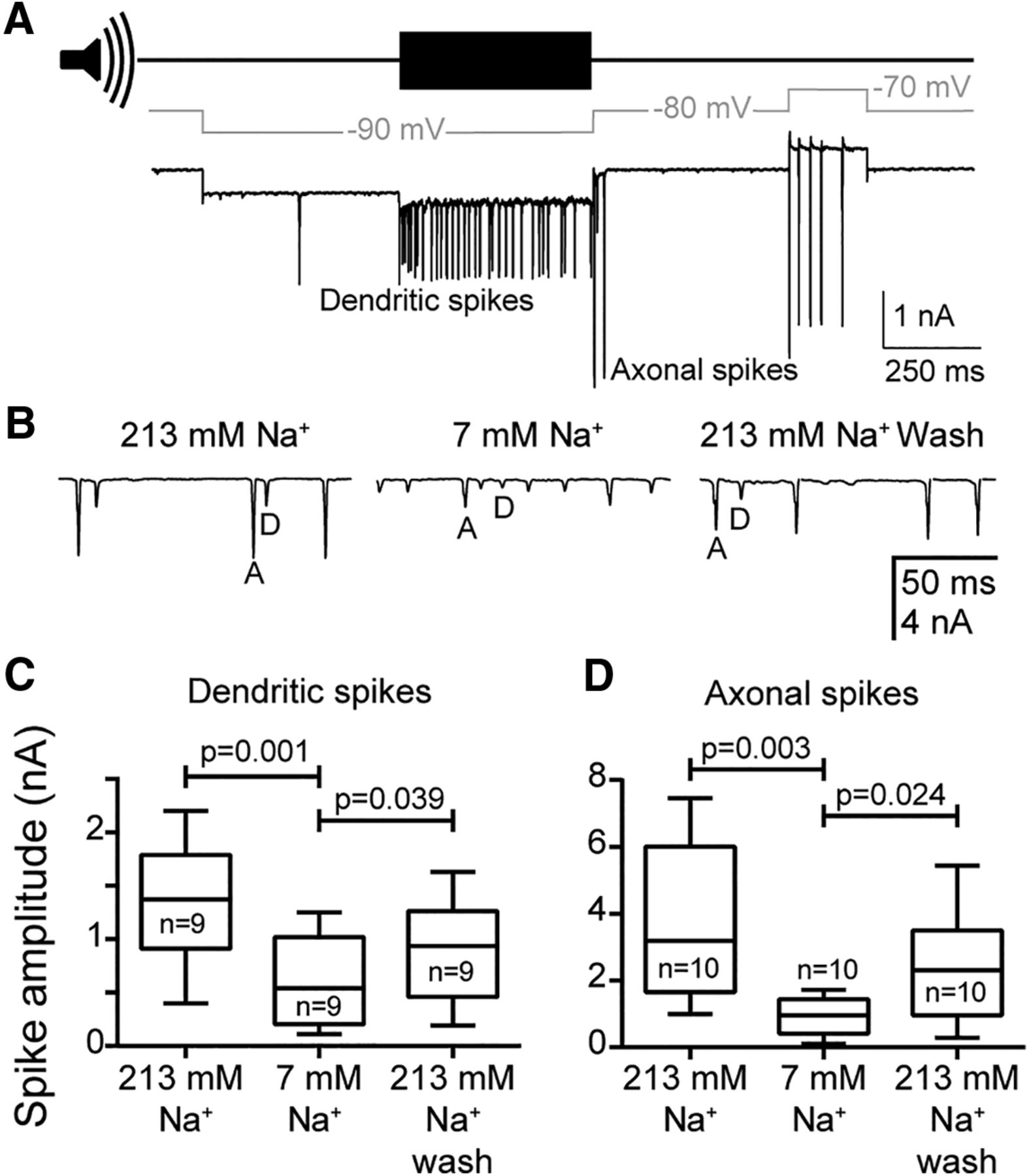 The Role Of The Mechanotransduction Ion Channel Candidate