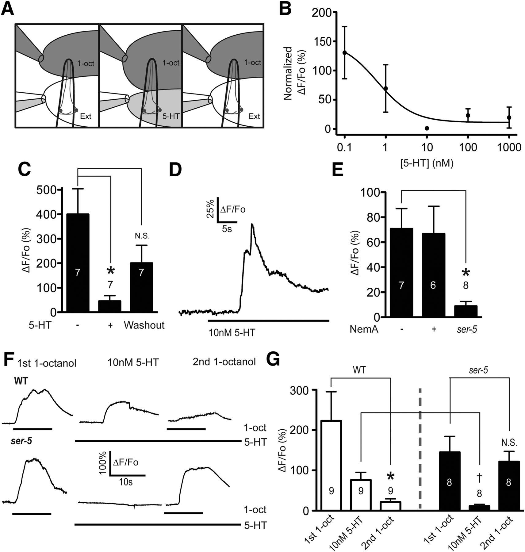Serotonin Disinhibits A Caenorhabditis Elegans Sensory