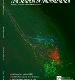 tau pathology is present in vivo and develops in vitro in sensory neurons from human p301s tau transgenic mice a system for screening drugs against  [ 889 x 1112 Pixel ]