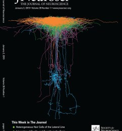 ctcf governs the identity and migration of mge derived cortical interneurons journal of neuroscience [ 887 x 1144 Pixel ]