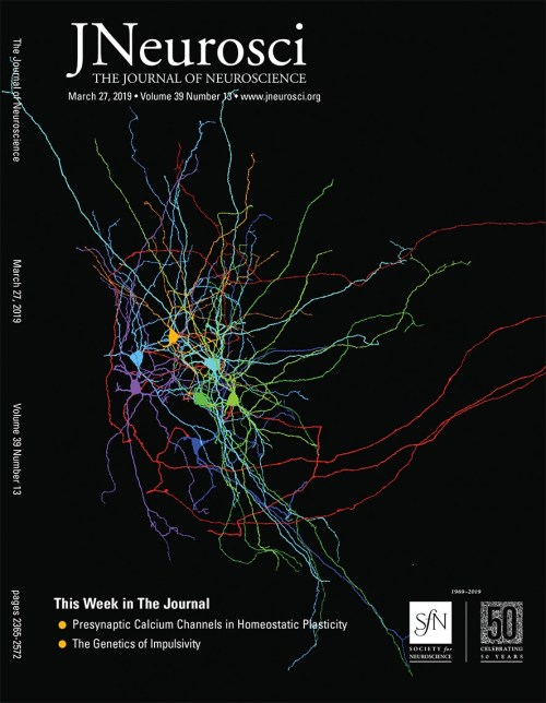 small resolution of insensitivity of place cells to the value of spatial goals in a two choice flexible navigation task journal of neuroscience