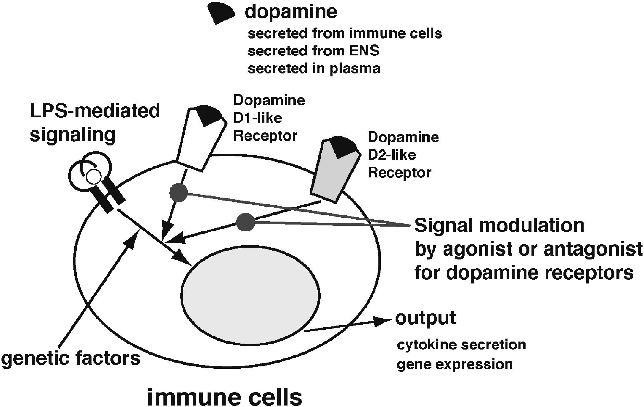 Berberine Is A Dopamine D1 And D2 Like Receptor