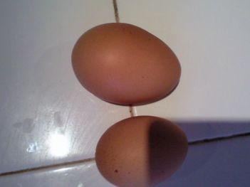 HUGE egg / normal egg