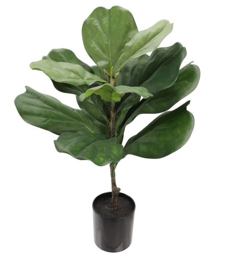 fiddle fig leaf plant from Joann Stores