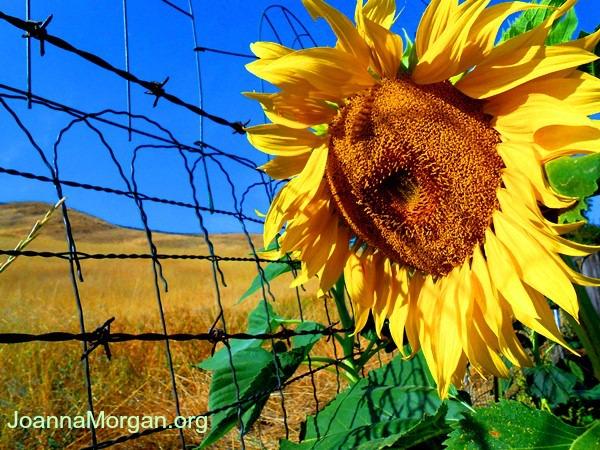 The Miracle of Forgiveness by Joanna Morgan 3-5-13