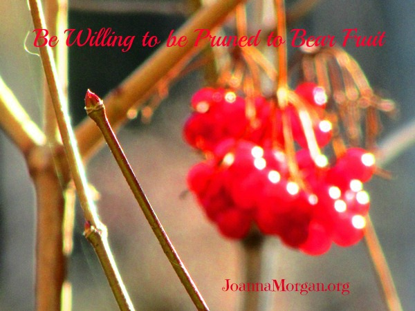 Pruned to Bear Fruit by Joanna Morgan 4-26-13