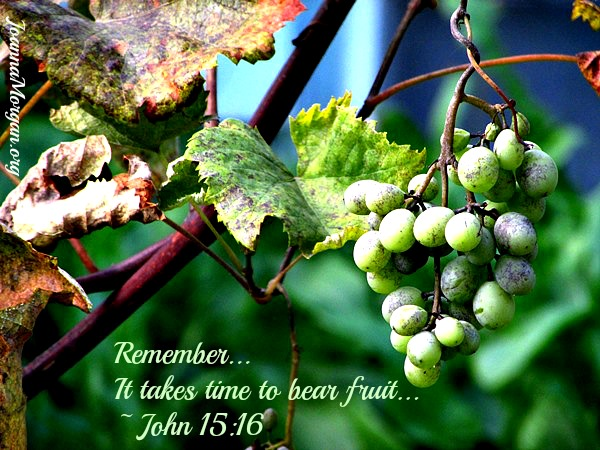 It Takes Time to Bear Fruit by Joanna Morgan 2-18-14 Blog 2