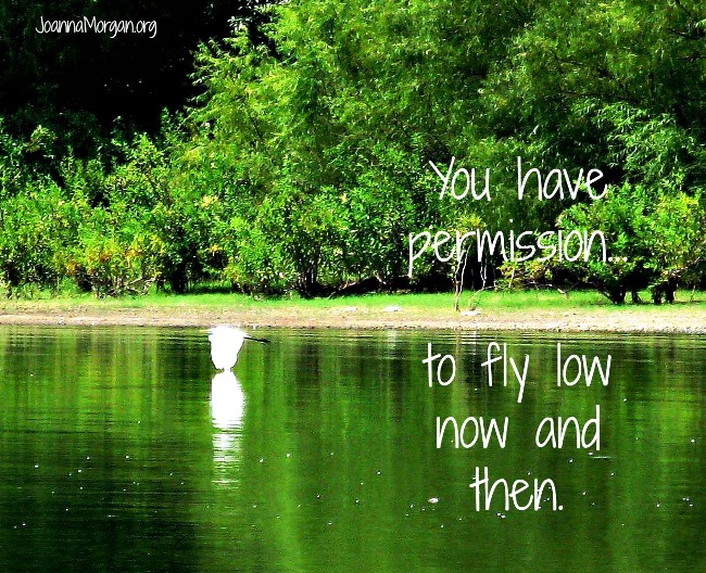 Permission to Fly Low by Joanna Morgan