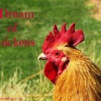 I Dream of Chickens