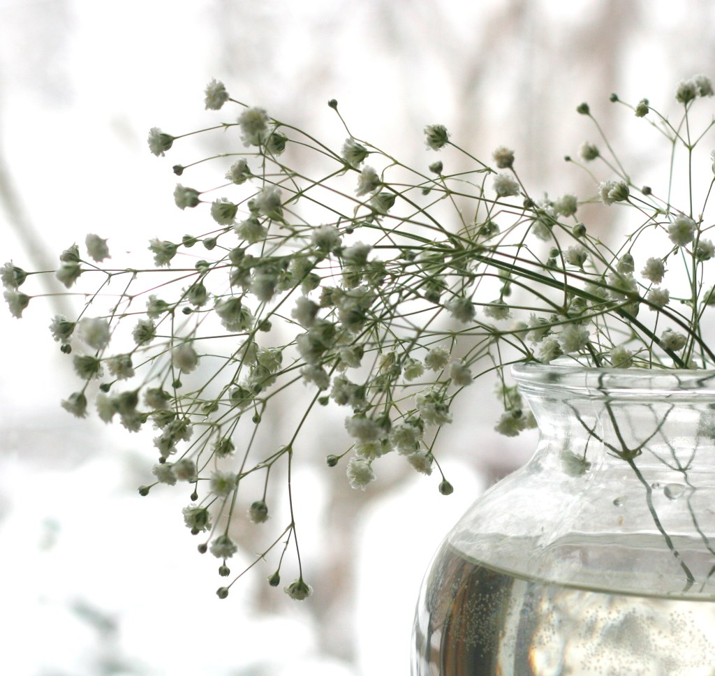 This Valentine's Day, Think of Baby's Breath