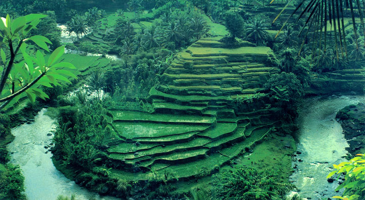 VÍdeo indonésia