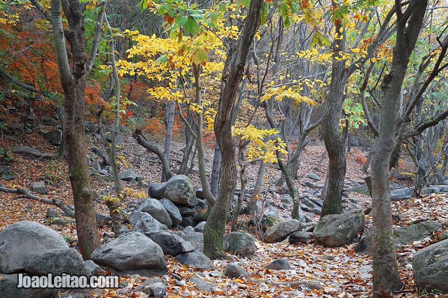 Parque Natural do Monte Kuwol