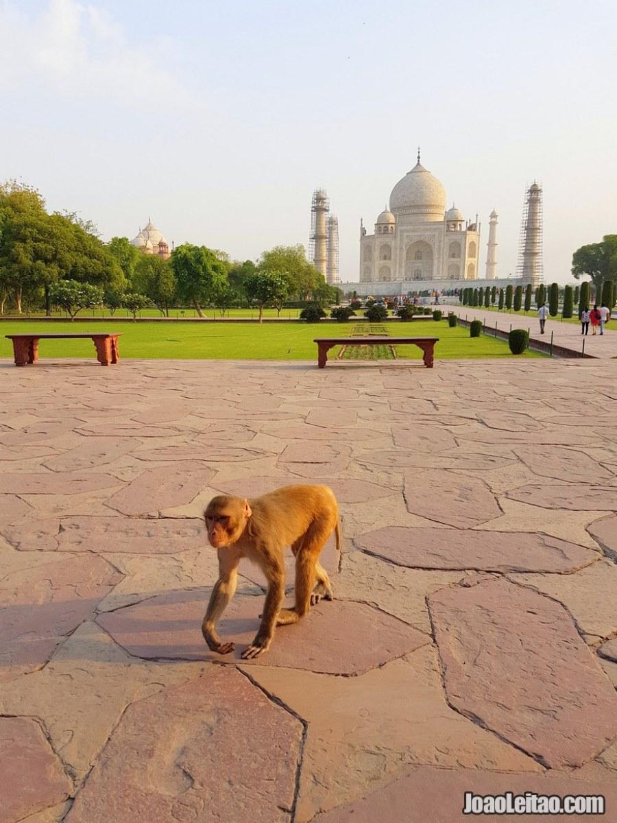 Taj Mahal Unesco monument located in Agra India